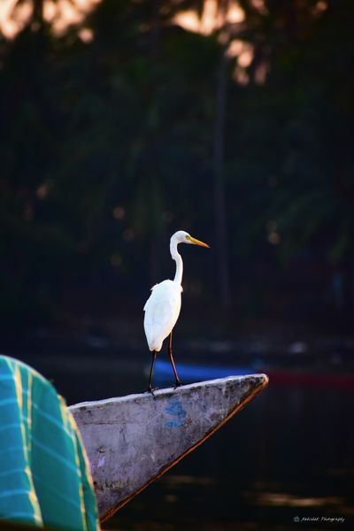 Boat Clicked On Nikon D3300 Crane - Bird Animal Wildlife Stork Reflection One Animal Perching Nature Water Day