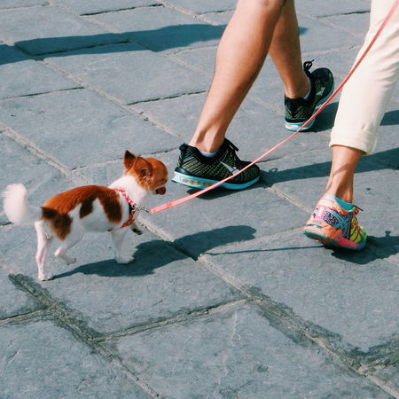 Dog walk Curiosity Footwear Friendship High Angle View Dog Exhausted Tiny Human Body Part Human Foot Human Leg Lifestyles Low Section Part Of Personal Perspective Shoe Sitting Standing Women Zoology Dogwalk Pets Pet Street City Lifestyle