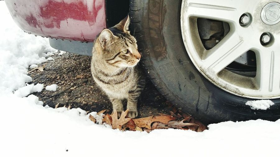peeking out Cats Of EyeEm Catsoftheworld Tire Car Van Cat Hide Peekaboo Apprehension Snow Transportation No People Day Land Vehicle Winter Cold Temperature Outdoors Close-up Vehicle At Home Vehicle Part Wheel