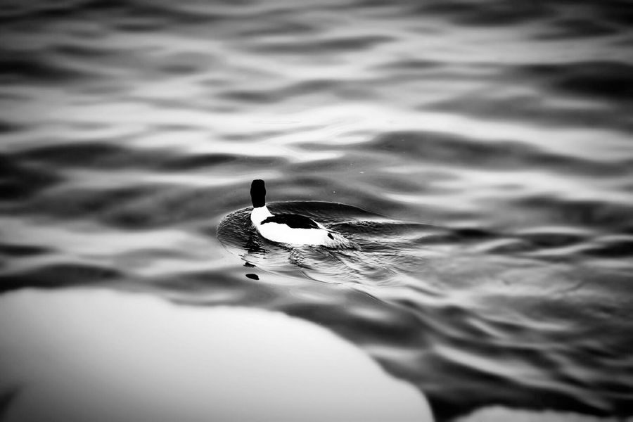 Relaxing Taking Photos What Does Peace Look Like To You? Taking Photos Birds Water blac&white
