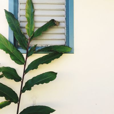 Plant Part Wall - Building Feature Leaf Green Color Architecture Window Built Structure Plant Growth Day Nature Copy Space Close-up House No People Building Exterior Outdoors Wall Building
