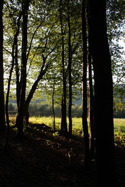Leaves Nature Nature Photography Slovakia Sun Goes Down <3 Tree Woods