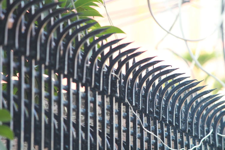 grill line! Backgrounds Steel Curve Pattern In A Row Close-up Barbed Wire Spiral Staircase Conformity Greenhouse Fence Plant Nursery Steps And Staircases Spiral Genetic Modification Chainlink Irrigation Equipment Barricade Spiked Repetition Chainlink Fence Coiled Spring Spiral Stairs Florist Tendril Spiral Galaxy Specimen Holder Horticulture Spiky Staircase