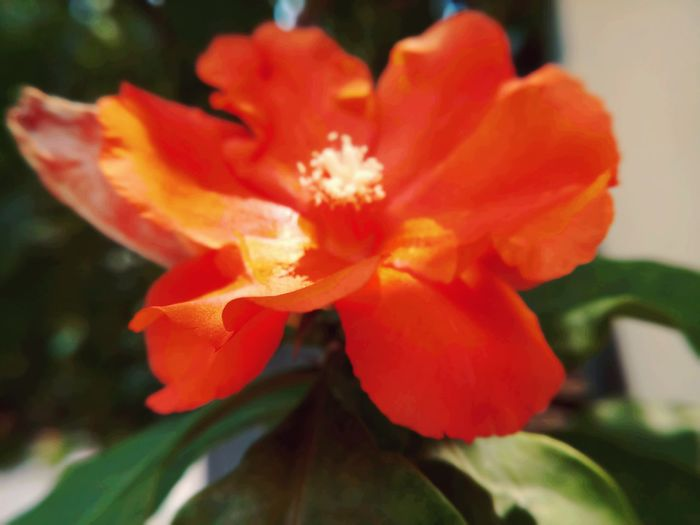 Beauty In Nature Blooming Close-up Day Flower Flower Head Fragility Freshness Growth No People Orange Color Outdoors Petal Plant