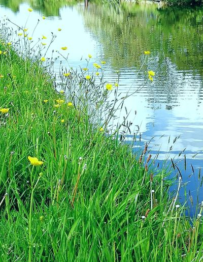 Plants growing on field by lake