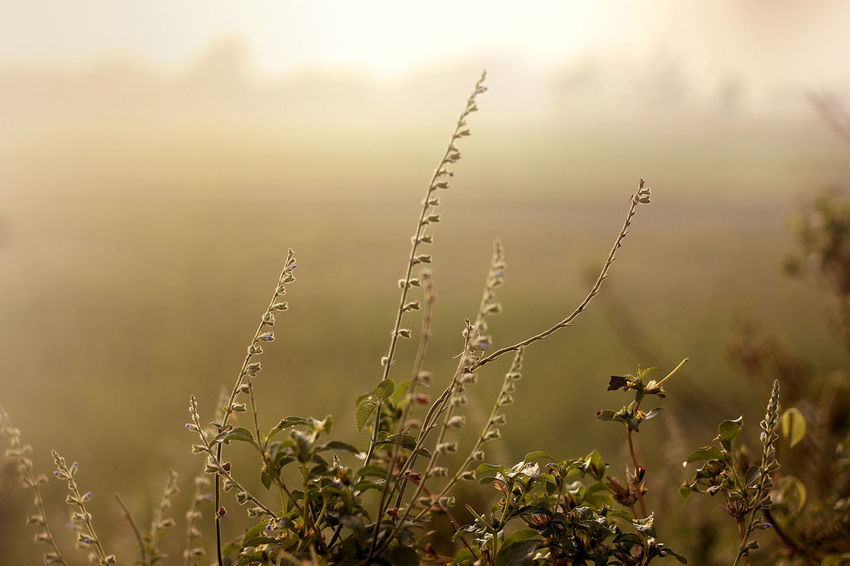Good Morning Beauty In Nature Close-up Day Field Focus On Foreground Fragility Freshness Grass Growth Nature No People Outdoors Plant Rural Scene Sky Tranquility