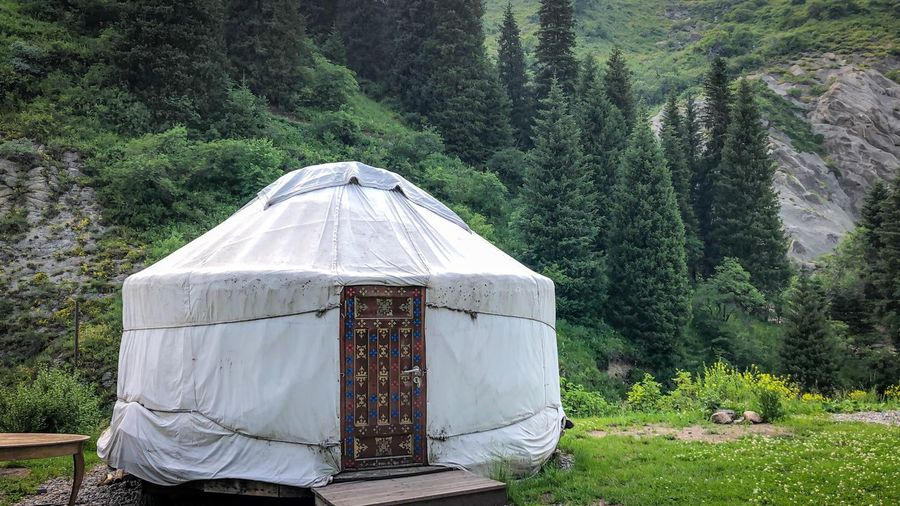 Yurt Yurt Plant Tree Land Day Growth Nature Green Color Forest Tranquility No People Beauty In Nature Outdoors Tranquil Scene Tent Scenics - Nature Non-urban Scene Grass