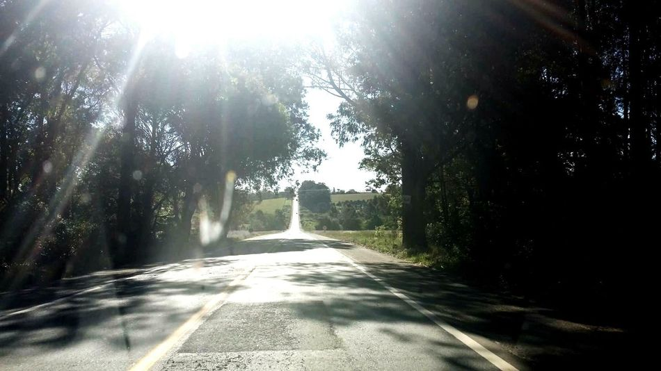 Alone coming back homeTree Sunlight The Way Forward Road Sunbeam Shadow Long Empty Transportation Sunny Solitude Street Tranquility Day Tree Trunk Lens Flare Tranquil Scene Lovedriving Drive Home Drive Transportation Nature Green Nature Photography Beautiful Nature