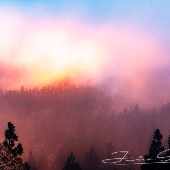 Colores en la niebla First Eyeem Photo