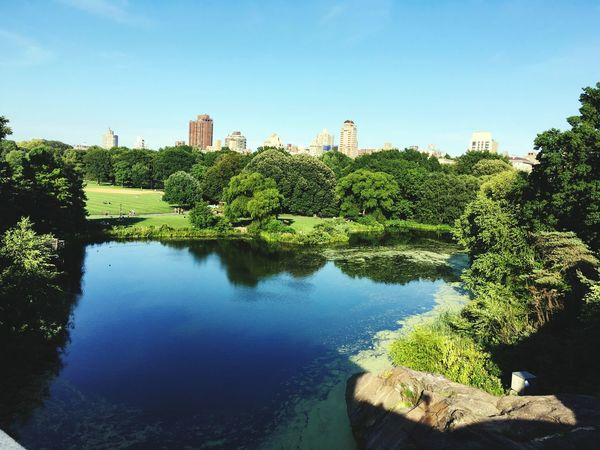 NYC Central Park Hello World
