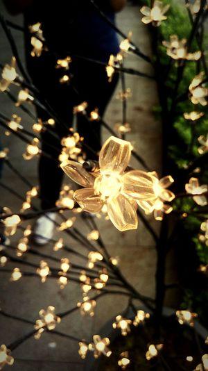 Close-up of illuminated flowers at night