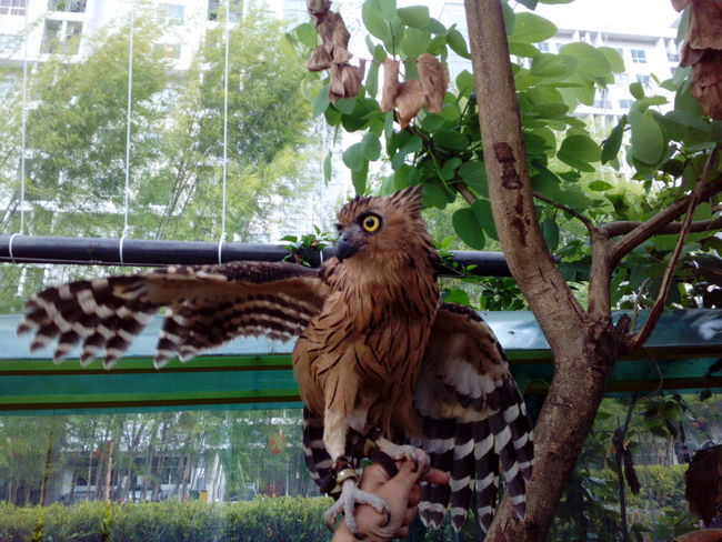 Tree Animal Themes No People Nature Mammal Day Animal Wildlife Animals In The Wild Outdoors Owl Owl Wings One Animal Green Color Bird Perching Close-up