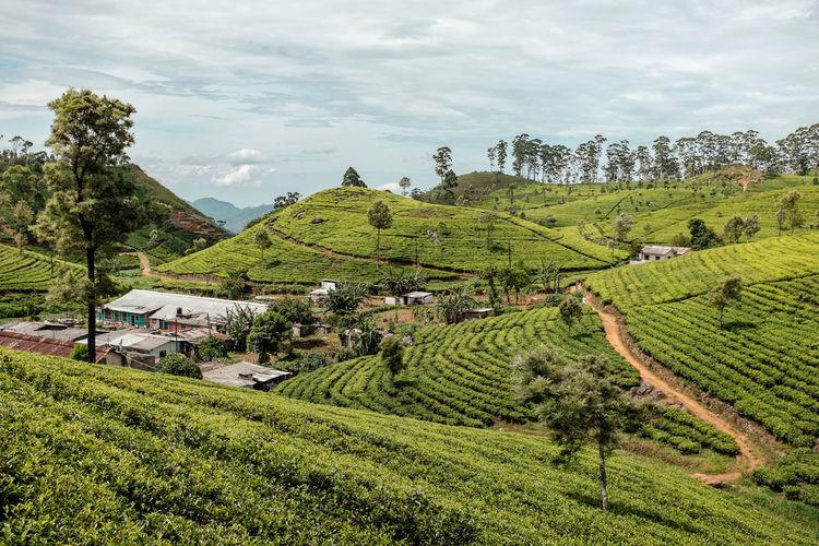 ASIA Ceylon Tea