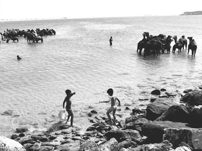 People and animals in water of persian gulf for washing and cooling themselves. Qeshm Island Bandar Abbas Iran Iranian Group Of People Water Sea Large Group Of People Real People Crowd Beach Nature Land Lifestyles Men Horizon Over Water Leisure Activity Day Silhouette EyeEmNewHere The Street Photographer - 2018 EyeEm Awards EyeEmNewHere A New Beginning The Photojournalist - 2019 EyeEm Awards The Mobile Photographer - 2019 EyeEm Awards The Street Photographer - 2019 EyeEm Awards