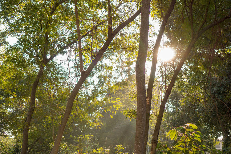 Beauty In Nature Branch Day Forest Growth Lens Flare Low Angle View Nature No People Outdoors Scenics Sky Sun Sunbeam Sunlight Tranquil Scene Tree Tree Trunk