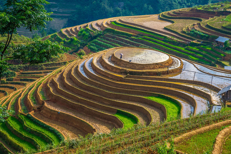 Scenic View Of Terraced Field
