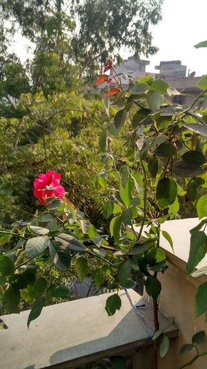 Nature Love Taking Photos Flower Greenery Nature_collection Trees Xiaomi Mi4i Naturephotography No Edit/no Filter