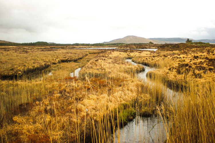 Scenic view of swamp against cloudy sky