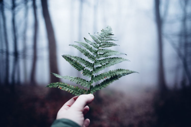 Plant Human Hand Tree Human Body Part Hand Nature Forest Focus On Foreground Day Growth One Person Real People Close-up Leaf Plant Part Personal Perspective Human Finger Beauty In Nature Finger Land Outdoors Body Part Pine Tree Coniferous Tree Harzmountains Harz
