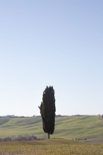 Sky Landscape Land Environment Field Nature Scenics - Nature Tranquil Scene Outdoors Plant Tranquility Beauty In Nature Clear Sky Grass Day Growth Rural Scene No People Copy Space Tree Agriculture Crete Senesi Pienza Val D'orcia Tuscany Tuscany Hills Tuscany Countryside Cypresses Road