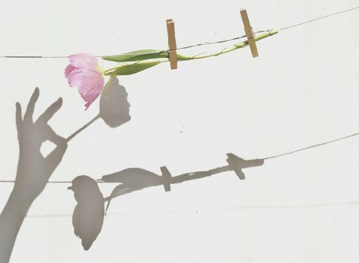 Tulipan Nature