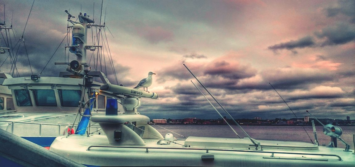 Kieler Woche Kiel Sea Gull EyeEm Nature Lover Landscape Nature Nature_collection Sky And Clouds Waterscape Waterfront