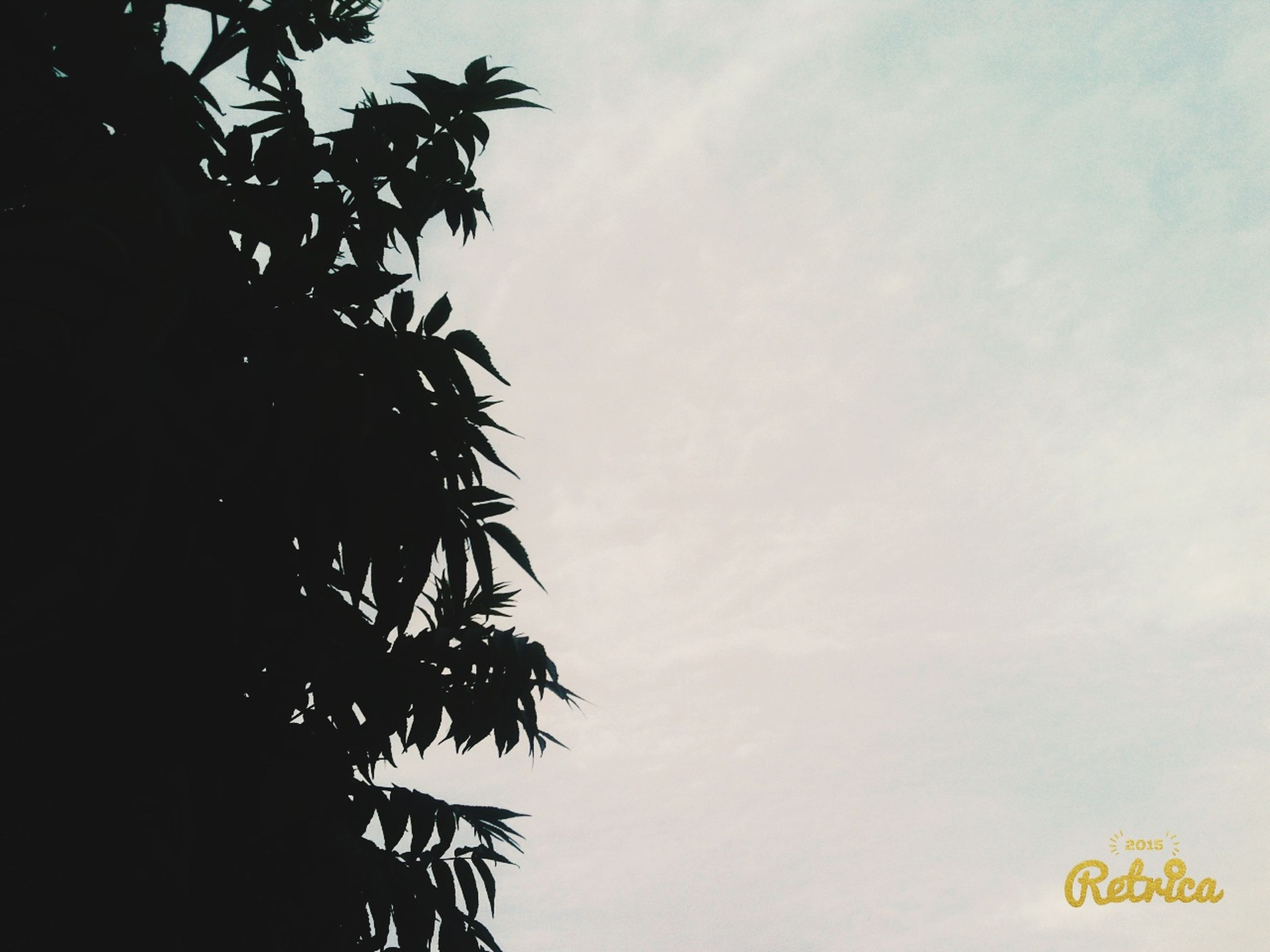tree, low angle view, sky, branch, growth, tranquility, nature, beauty in nature, leaf, silhouette, scenics, high section, tranquil scene, no people, outdoors, day, clear sky, treetop, cloud, cloud - sky