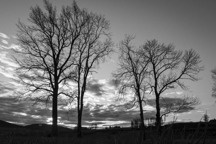 Low angle view of silhouette bare trees on field against sky