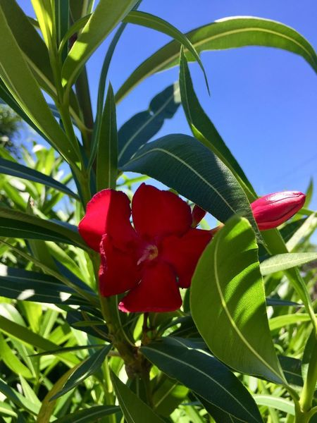 Flor Leaf Plant Part Plant Growth Red Beauty In Nature Nature