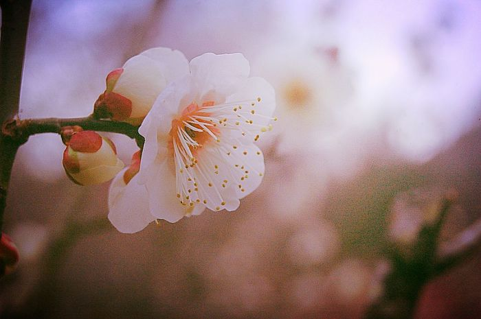 Showcase: February EyeEm Nature Lover Colors Blossom 梅 Plum Japan Fleshyplants Trees Flowerporn