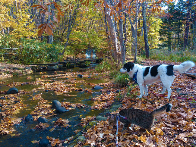 Autumn Leaves Cat Day Dog Outdoors Pond River Wood
