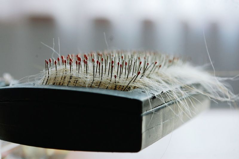 Close-up of hair on brush