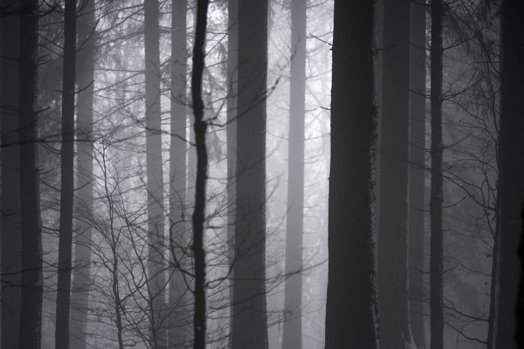 Christmas Foggy Forest Mistery Nature No People Outdoors Snow Wilderness Area