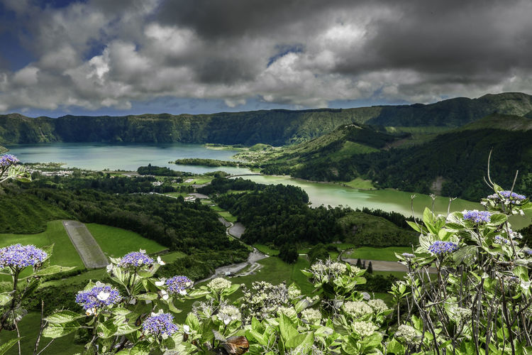 Scenic view of flowering plants on land against cloudy sky