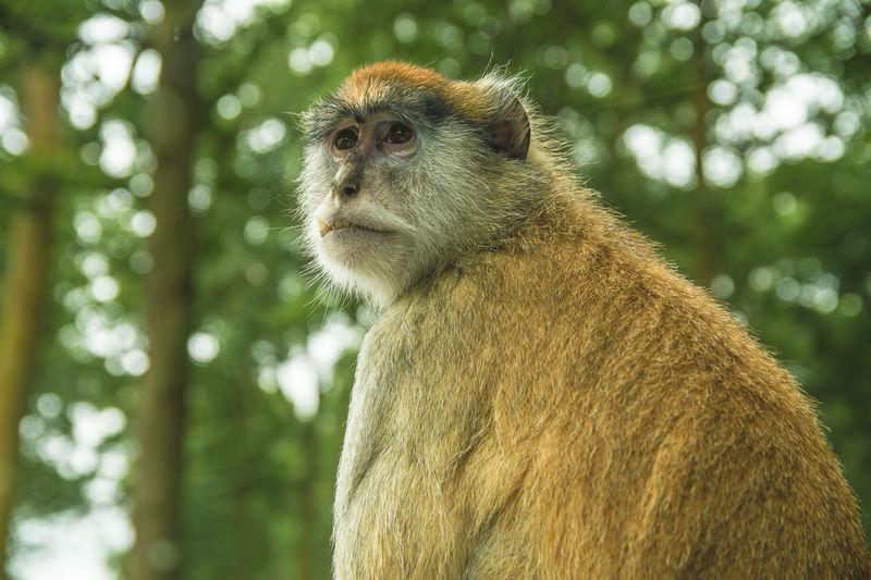 Portrait of monkey on tree