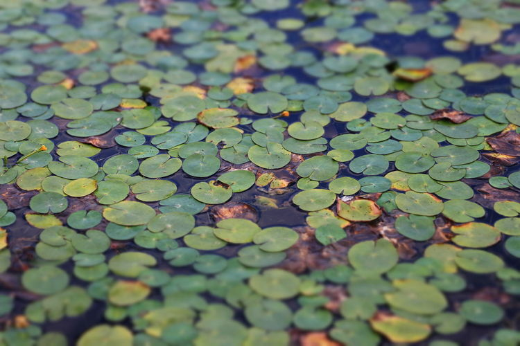 Green leaves floating on water
