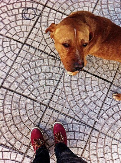 Dog Dogs Dog Love Loyal Tirana Albania Lost Dog Lost Pet Photography  Pet Love