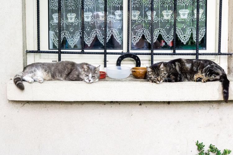Cats On Window