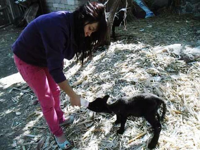 Animales :D