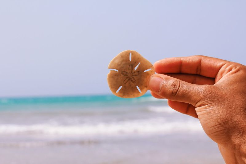 Person holding apple against sea