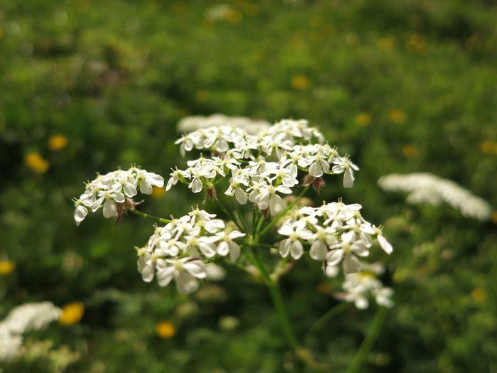 Flower Trekking Meadow Nature Reserve