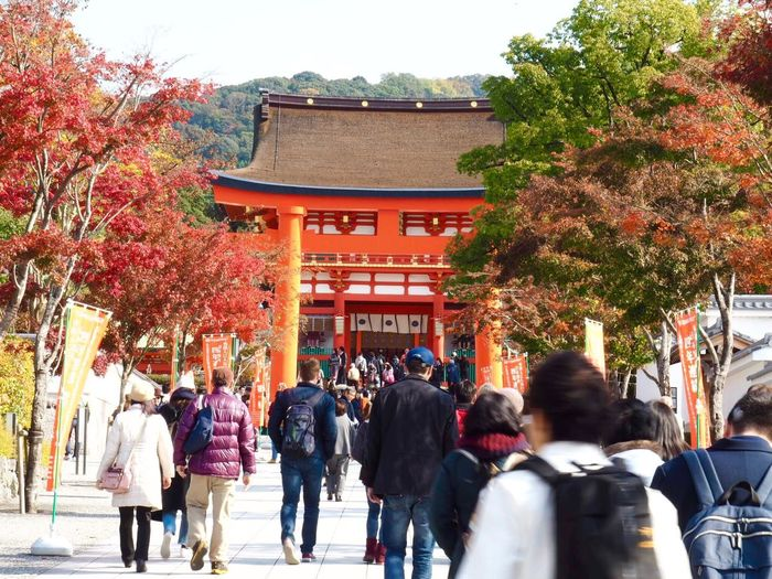 Kyoto Japan ASIA Inari Shrine Inari Gate Architecture Outdoors Real People Day Autumn Leaves Autumn Nature Olympus PEN-F