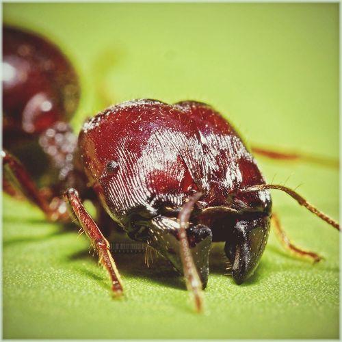 Nature_collection Macro Bug Macro Week