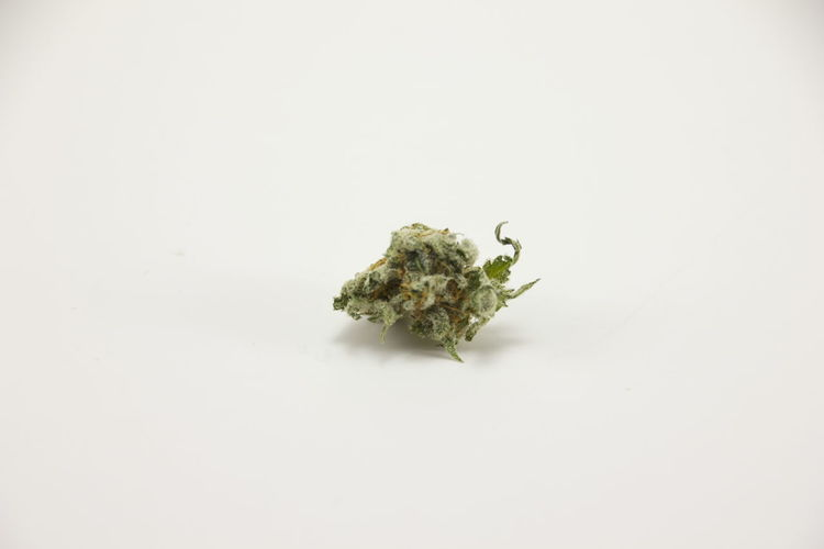 420 Cannabis Herb Nug Weed Life Bud Cannabis Plant Close-up Flowers Herbal Herbal Medicine Indoors  Marijuana Marijuana - Herbal Cannabis No People Plant Single Object Smoke Weed Still Life Studio Shot Weed Wellbeing White Background