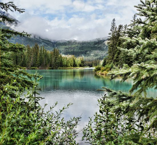 Alberta Alberta, Canada Beauty In Nature Day Forest Green Color Lake Landscape Lush - Description Mountain Nature No People Outdoors Pinaceae Pine Tree Pine Woodland Reflection Scenics Sky Tree Water