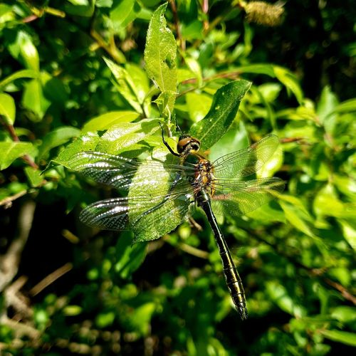 #Dragonfly Full Length Insect Spider Spider Web Leaf Close-up Animal Themes Plant Green Color
