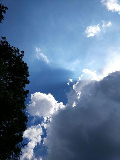 Summer sky Summer Tree Blue Sky Cloud - Sky Cumulus Cloud Sunbeam Cloudscape Dramatic Sky Meteorology