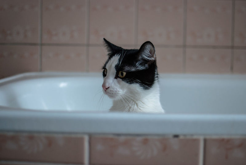 Animal Themes Animals Bathroom Bathtub Black Color Cats Close-up Domestic Animals Domestic Bathroom Domestic Cat Domestic Room Feline Furry Indoors  Kittens Kitty Light And Shadow Mouth Open No People One Animal Pet Pets The Week Of Eyeem Water Yawning