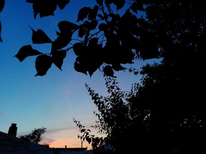 Silhouette No People Low Angle View Outdoors Tree Sky Beauty In Nature Sunset Branches Branches And Sky Leaves Silhouette Silhouettes Wolfzuachis Showcase: May Ionita Veronica @WOLFZUACHiV Eyeem Market Veronica Ionita Showcase: 2017 Huaweiphotography Wolfzuachiv On Market Edited By @wolfzuachis Evening Sky Romania Mix Yourself A Good Time