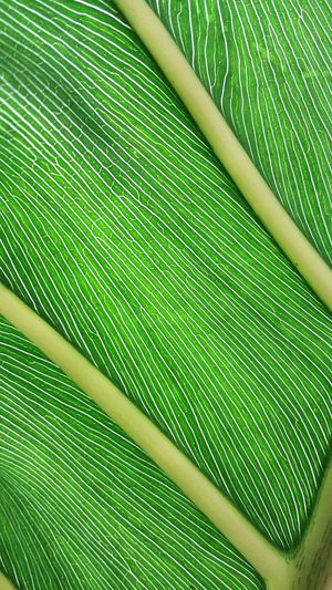 Full Frame Shot Of Plant Leaf